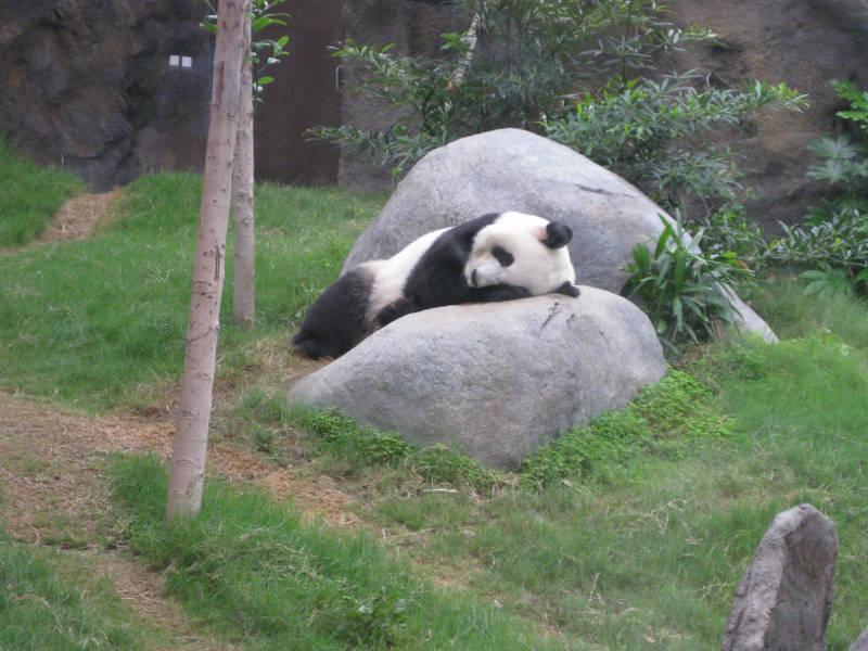 Panda Park in Ocean Park Hong Kong