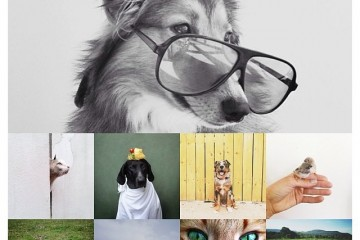 Does animals need glasses