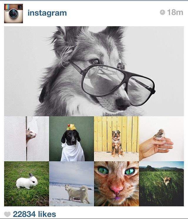 Do animals need glasses