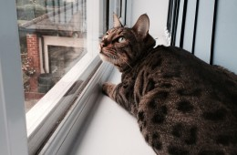 Finley Bird Watching