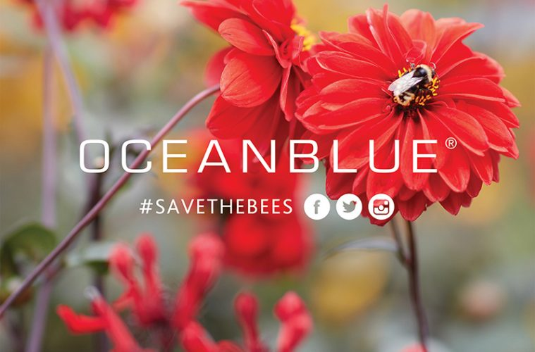 Save the Bees X International Eyewear